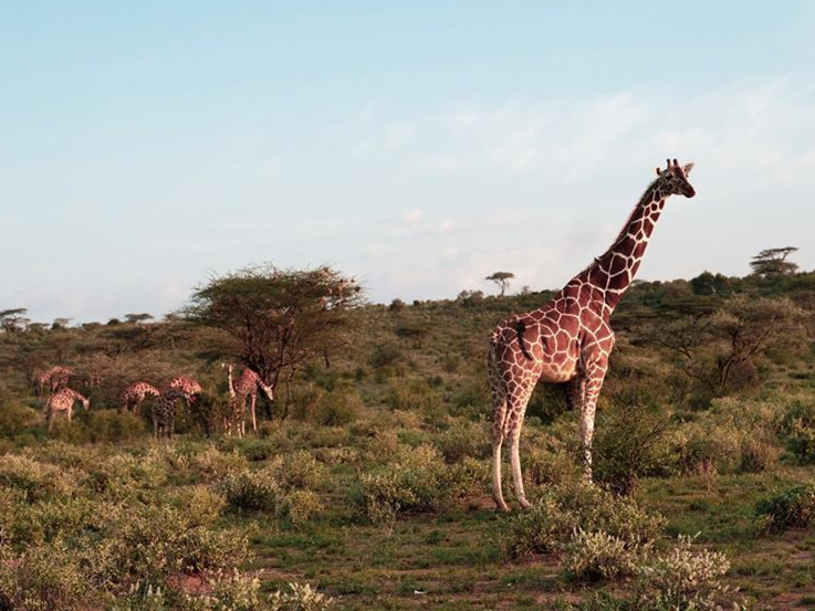 Scenery of Kenya's Samburu National Reserve