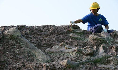 New dinosaur species found in Chongqing, Southwest China