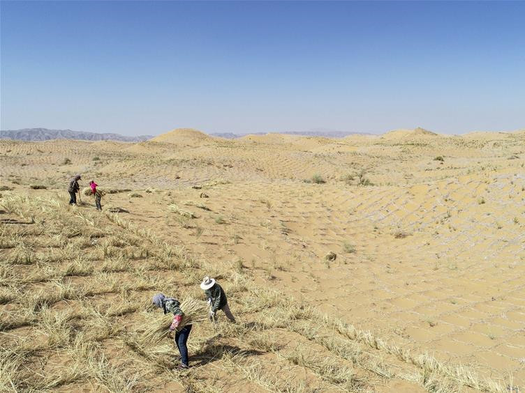 Northwest China city makes efforts to curb desertification