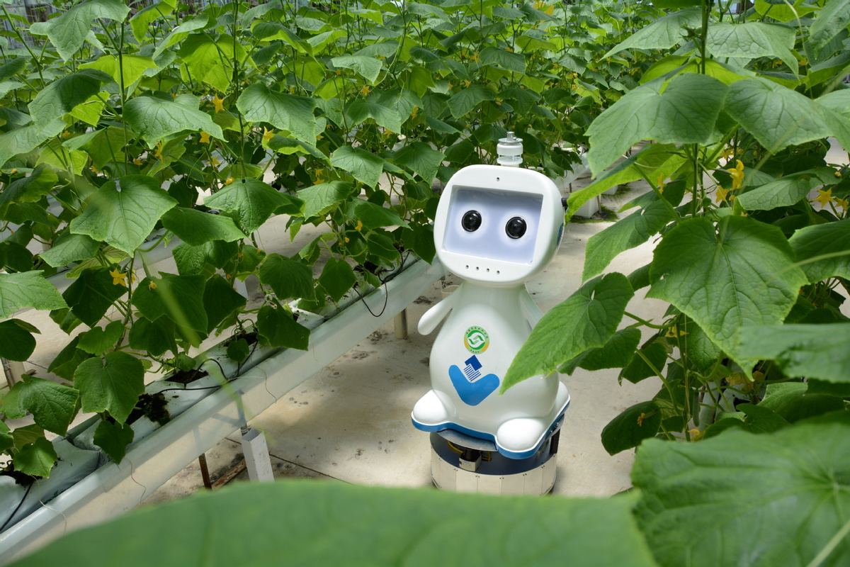 5G-enabled farming robot launched in East China