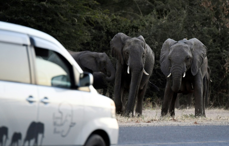 Fearful of elephant attacks, some in Botswana cheer hunting's return