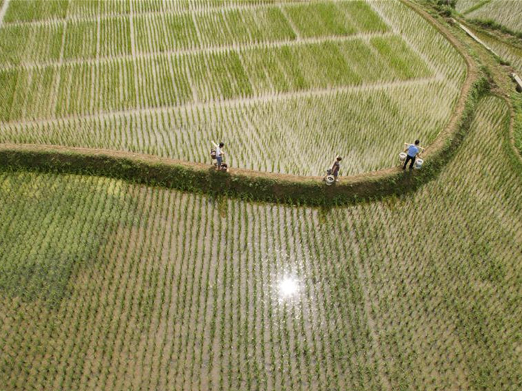 Qianxi County guides farmers to raise fish, frog, shimp in rice field to boost income