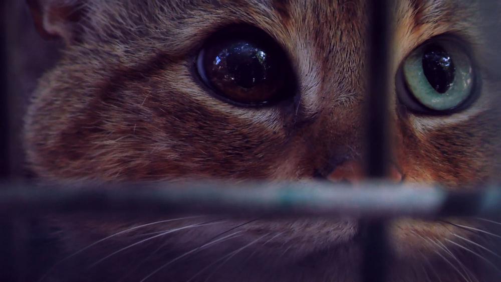 fox-cat_副本.jpg