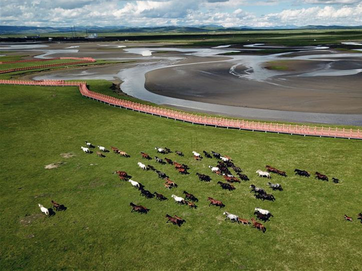 Hequ horses in Maqu County, China's Gansu