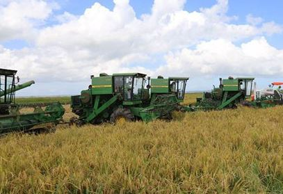 China, Africa sign rice industry initiative