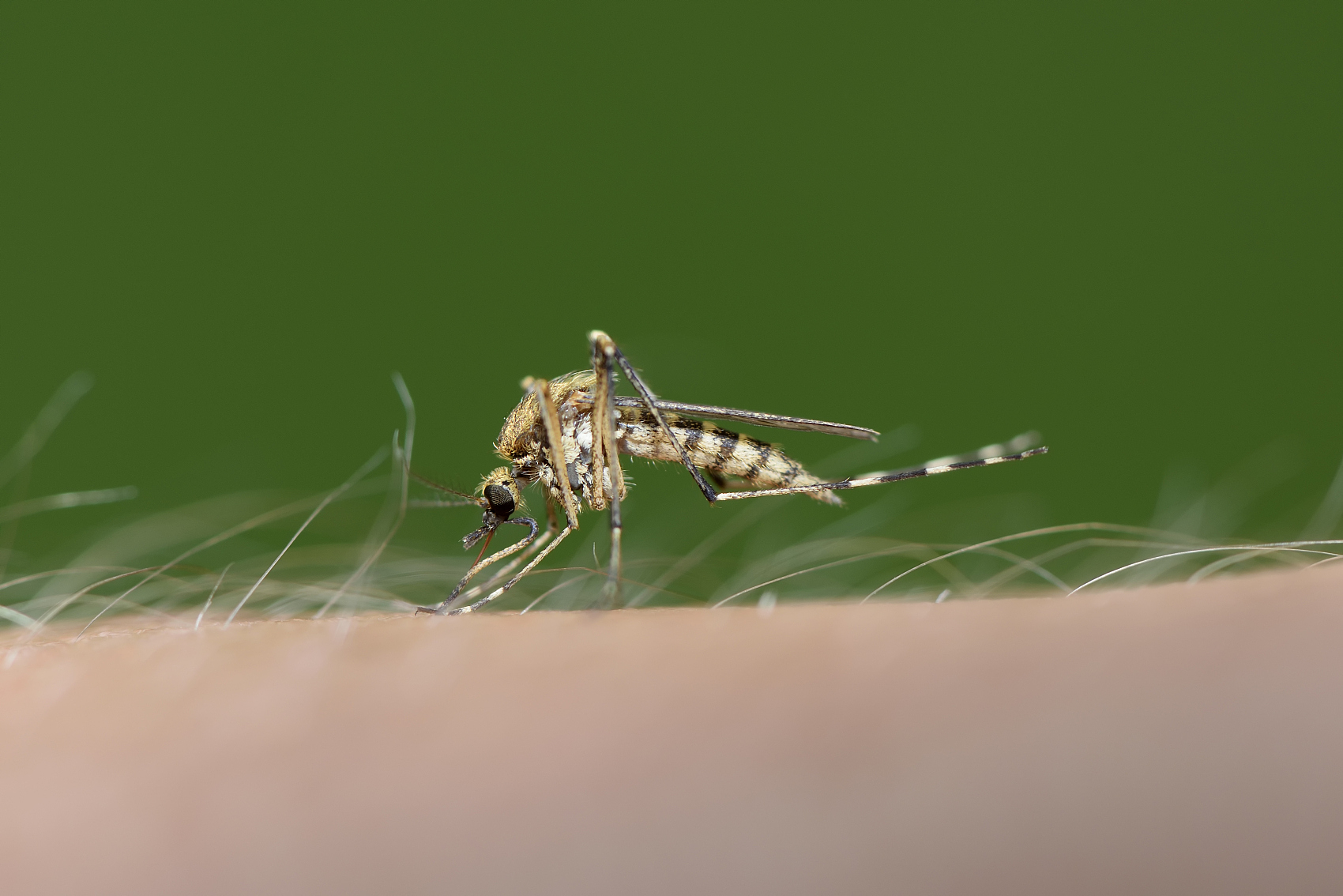 Mosquito alert! Are you using the correct method to protect yourself?