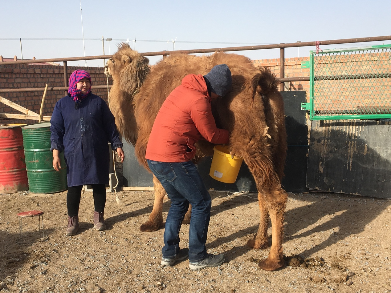 Travelogue: How to be a camel herder