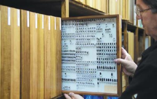 Insect apocalypse: German watchers sound alarm on bugs
