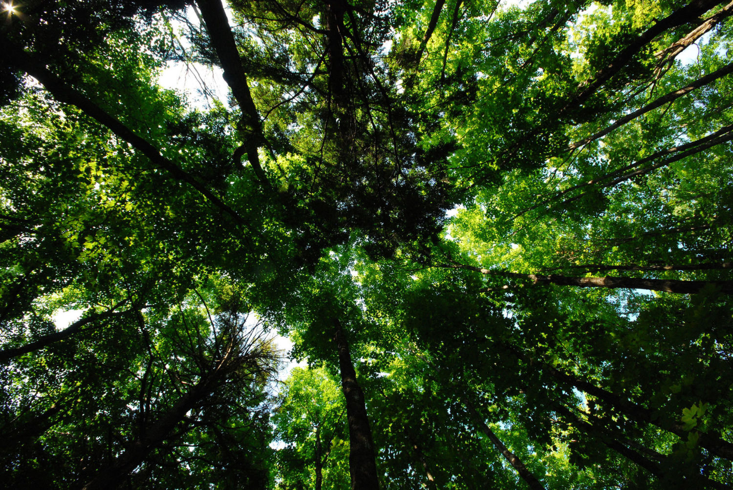 Study finds huge potential to grow trees, capture carbon emissions
