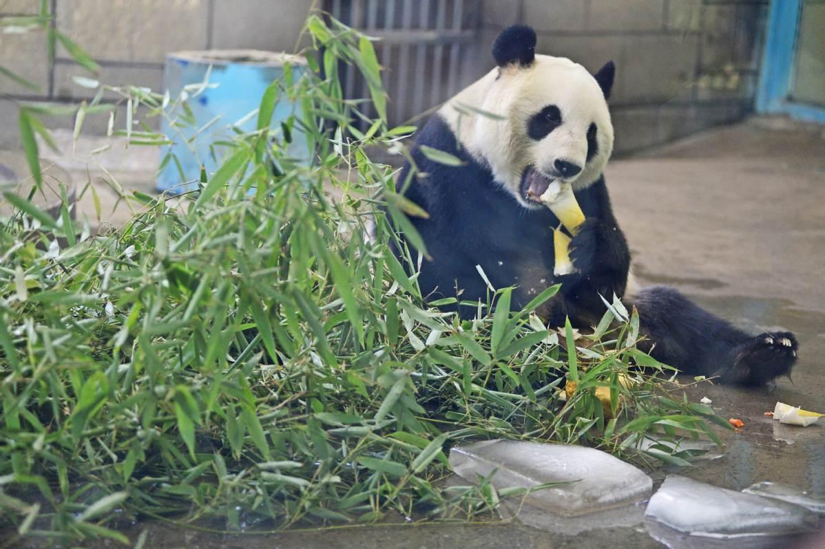 Tianjin Zoo animals beat the summer heat