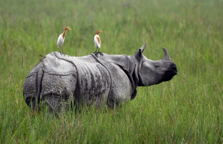 Hell in high water: Braving the monsoon to save India's rhinos