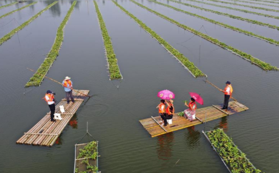Tuanzhuang Village in China's Jiangsu utilizes aquatic environment for local tourism