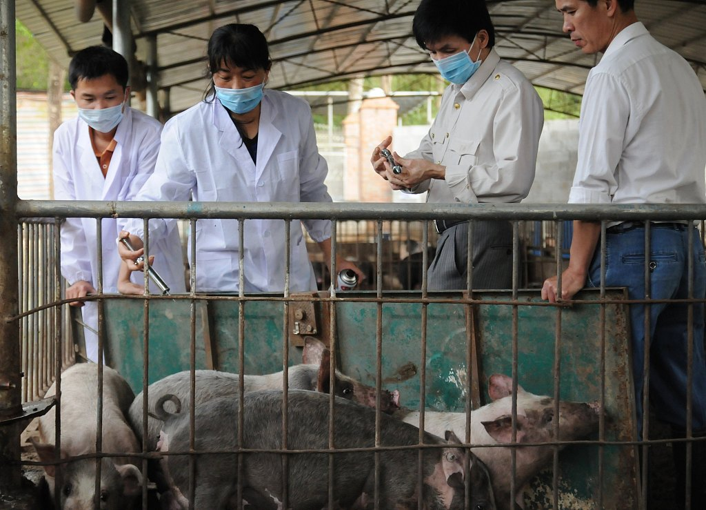 New African swine fever case reported in Guangxi