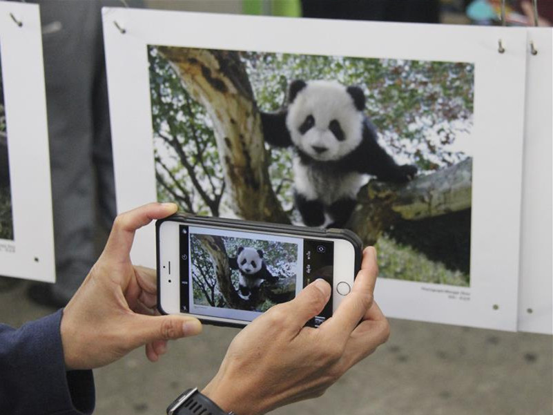 Chinese photographer holds photo exhibition on giant panda in Thailand